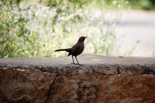 Безкоштовне стокове фото на тему «дика природа, дикий, земля, їжа»