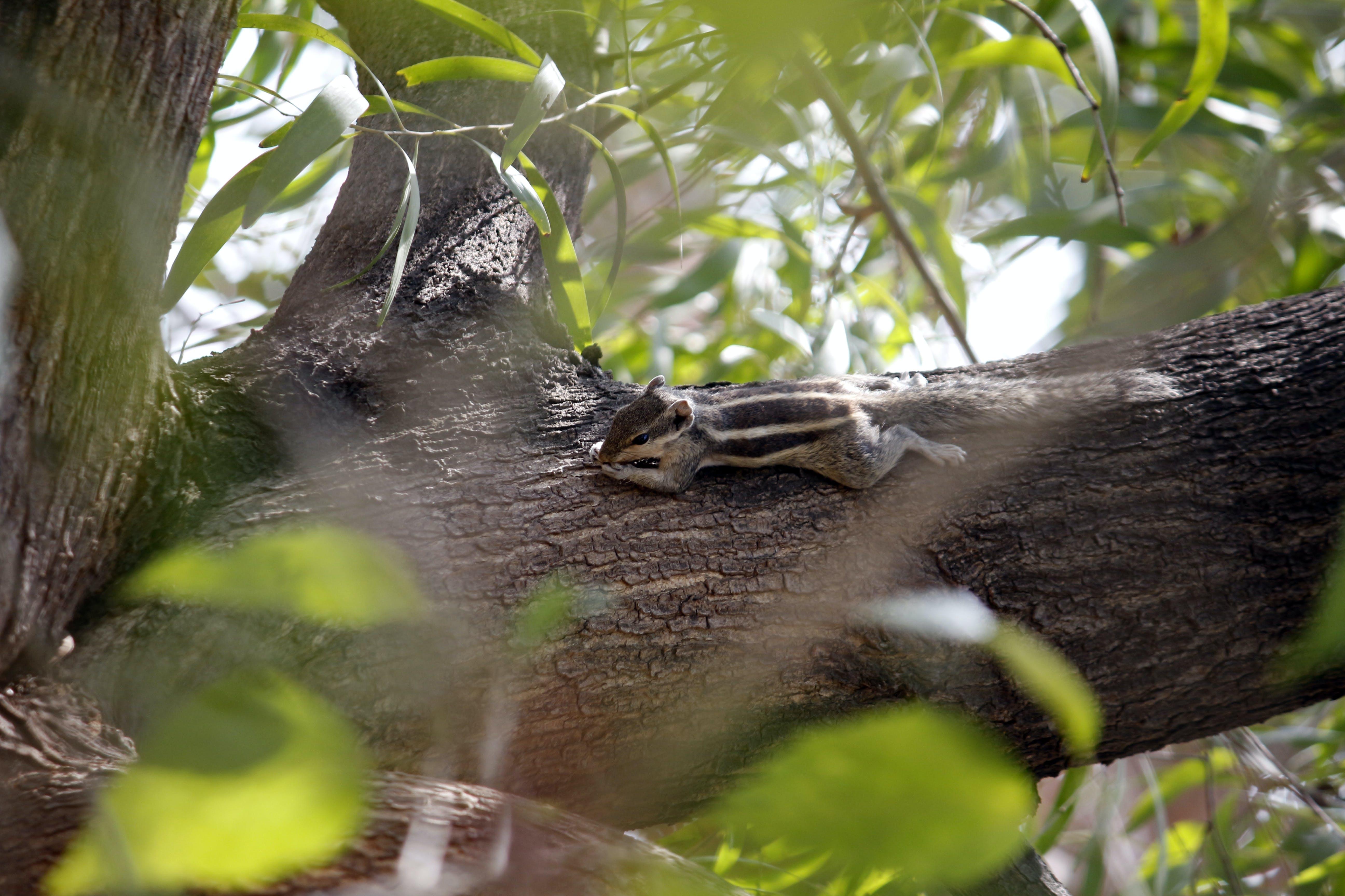Δωρεάν στοκ φωτογραφιών με άγρια φύση, άγριος, δέντρο, διατήρηση