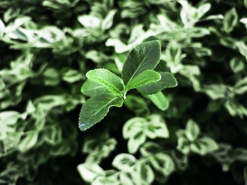 Darmowe zdjęcie z galerii z makro, zielony