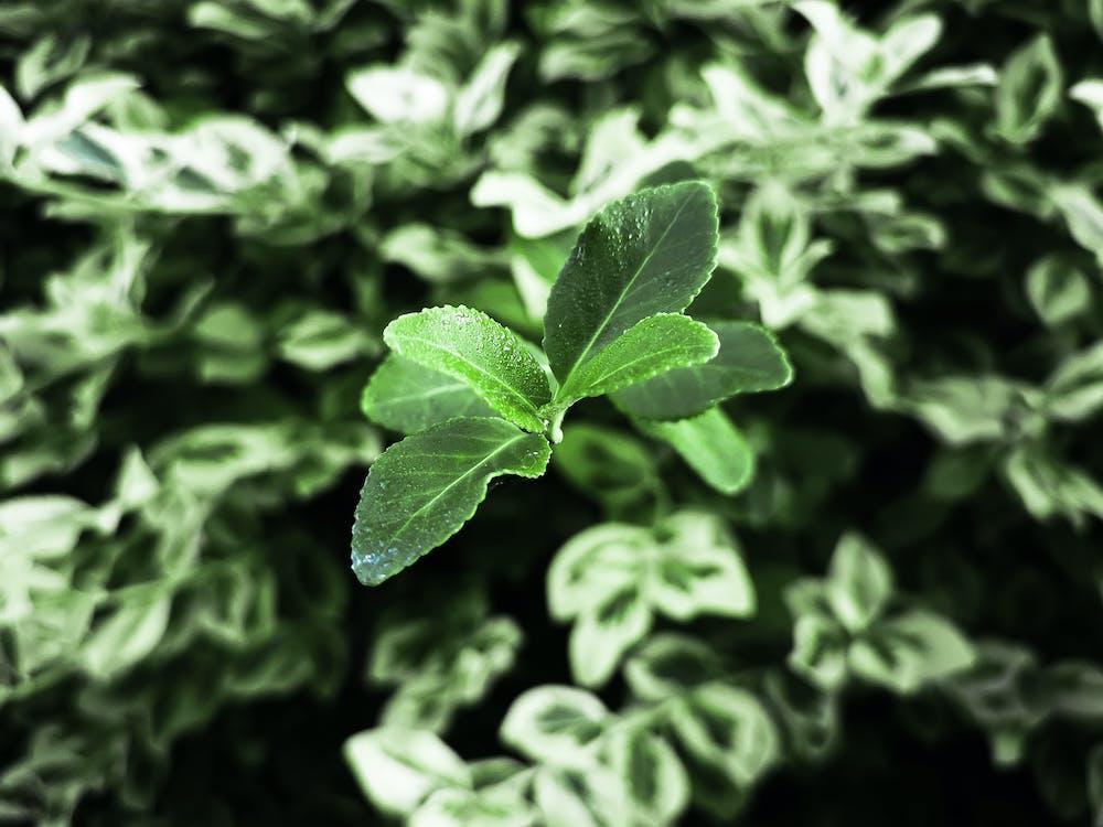 makro, zielony