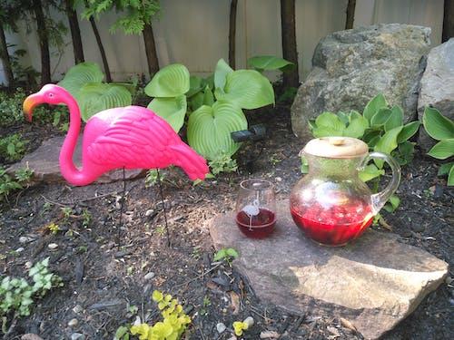 Free stock photo of flamingo, sangria