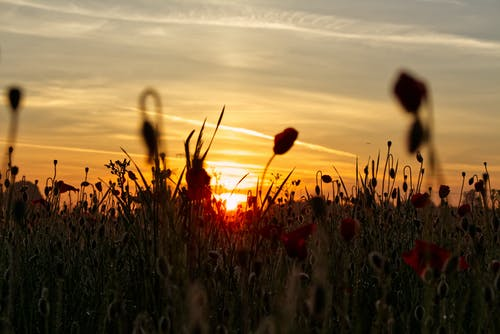 Free stock photo of abstract photo, cornflower, dramatic sky, early morning