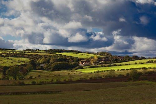 Photos gratuites de arbres, ciel, clairière, colline