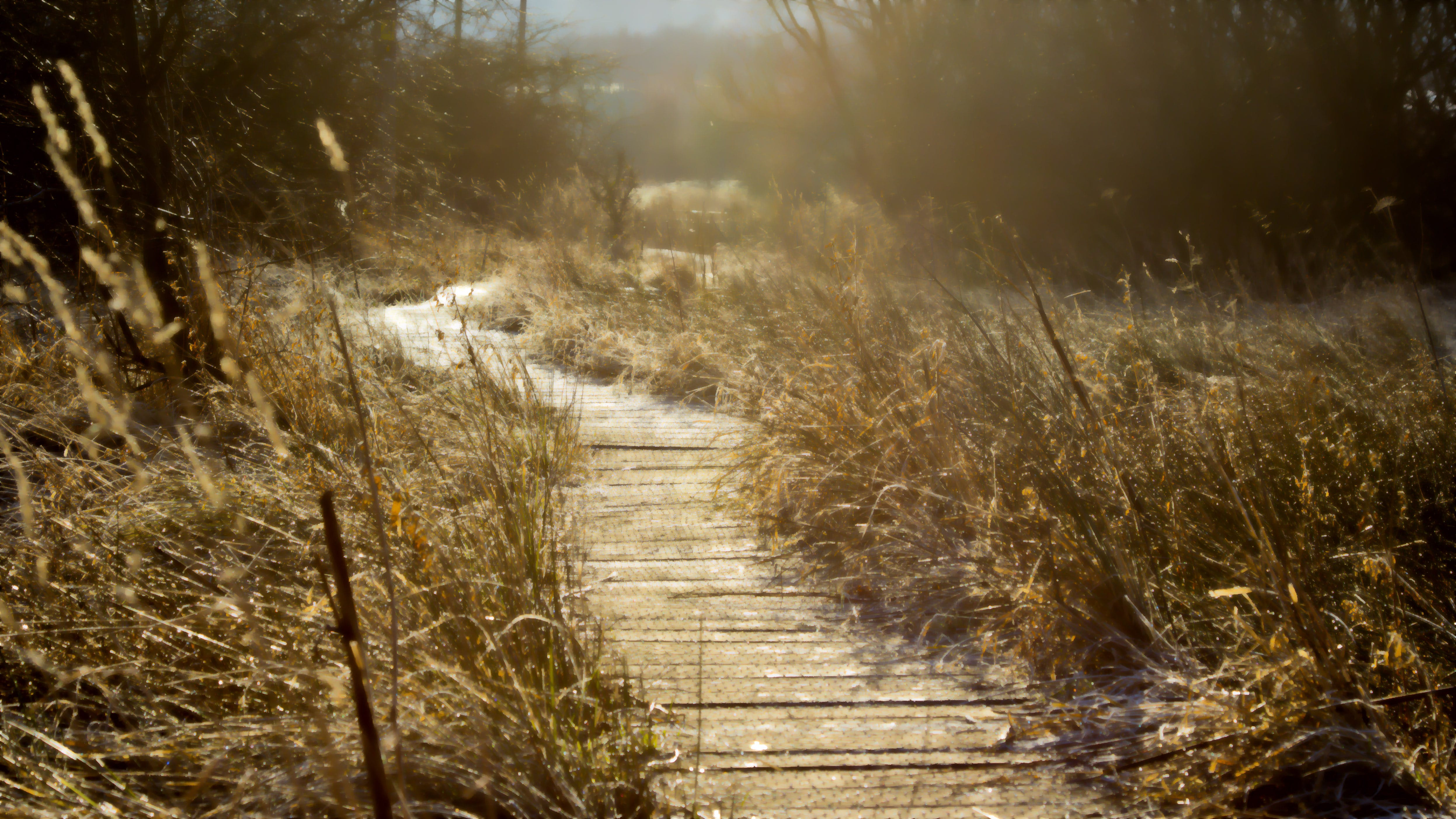 Free stock photo of Tandfield Wetlands