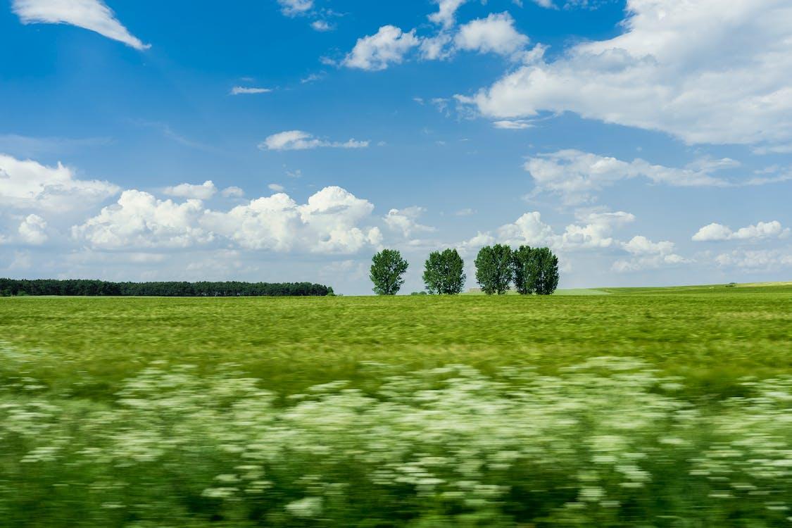 časosběr, denní, farma