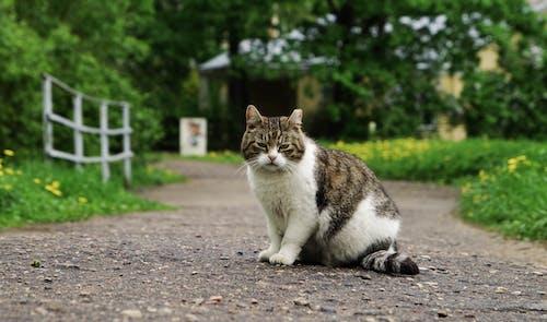 Foto profissional grátis de animal, animal de estimação, bigodes de gato, bonitinho