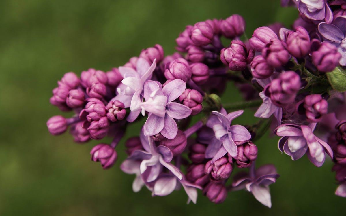 bitki örtüsü, büyüme, çiçek