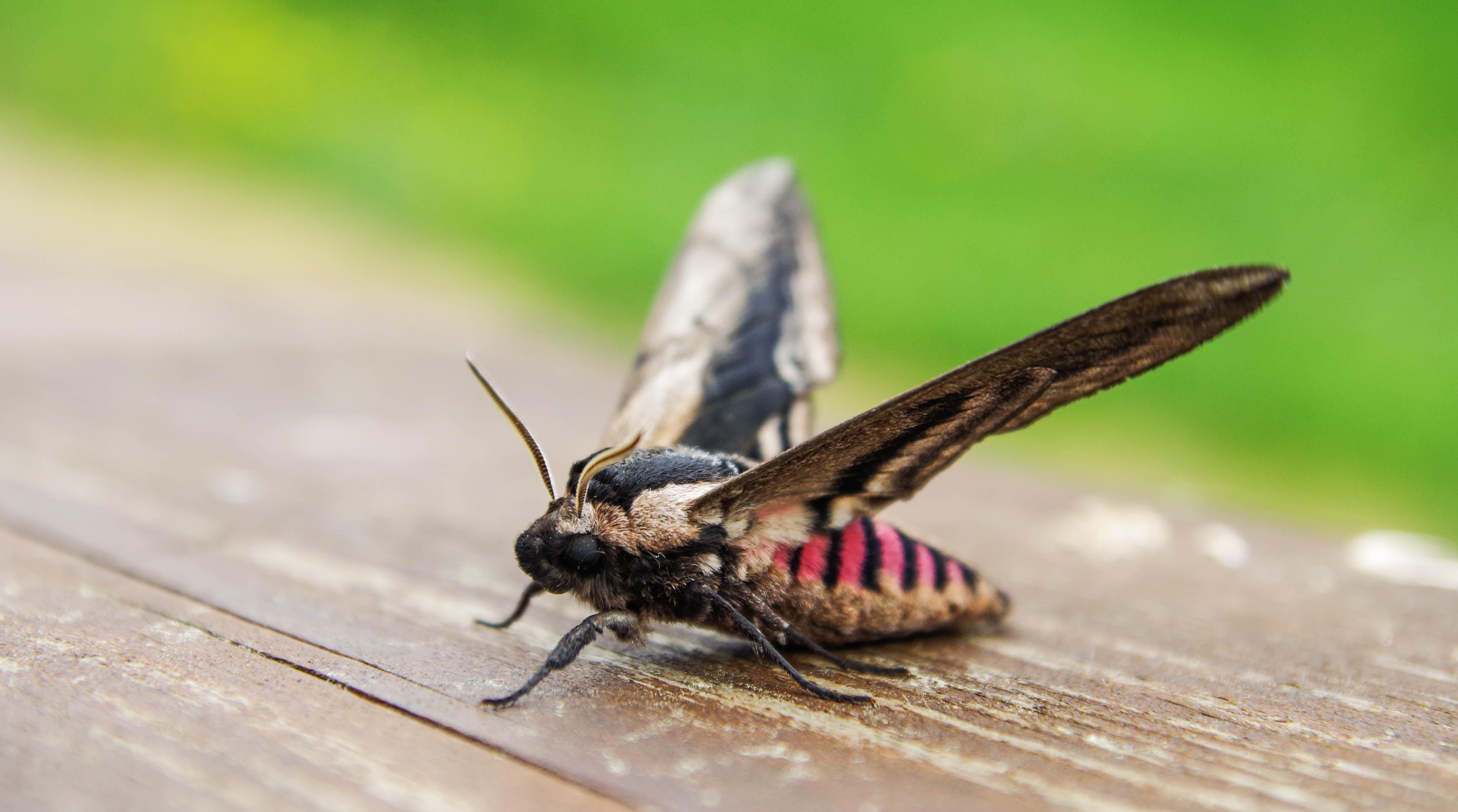 Kostenloses Stock Foto zu entomologie, farben, flügel, insekt