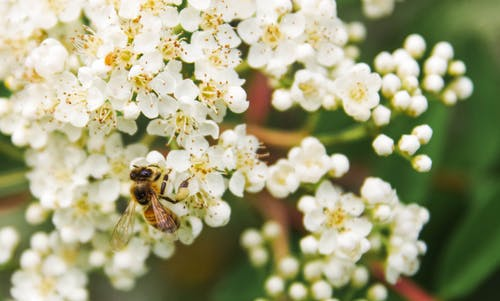 Tilt Shift Lens Photography of Bee on White Flower