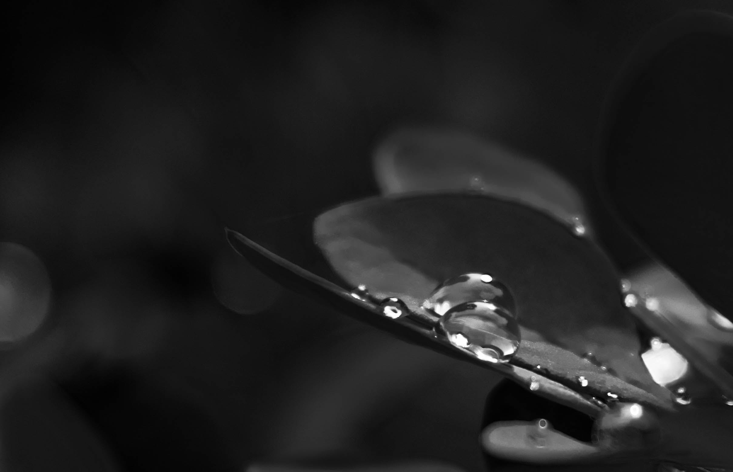 Grayscale Photo of Drew Drops on Plant
