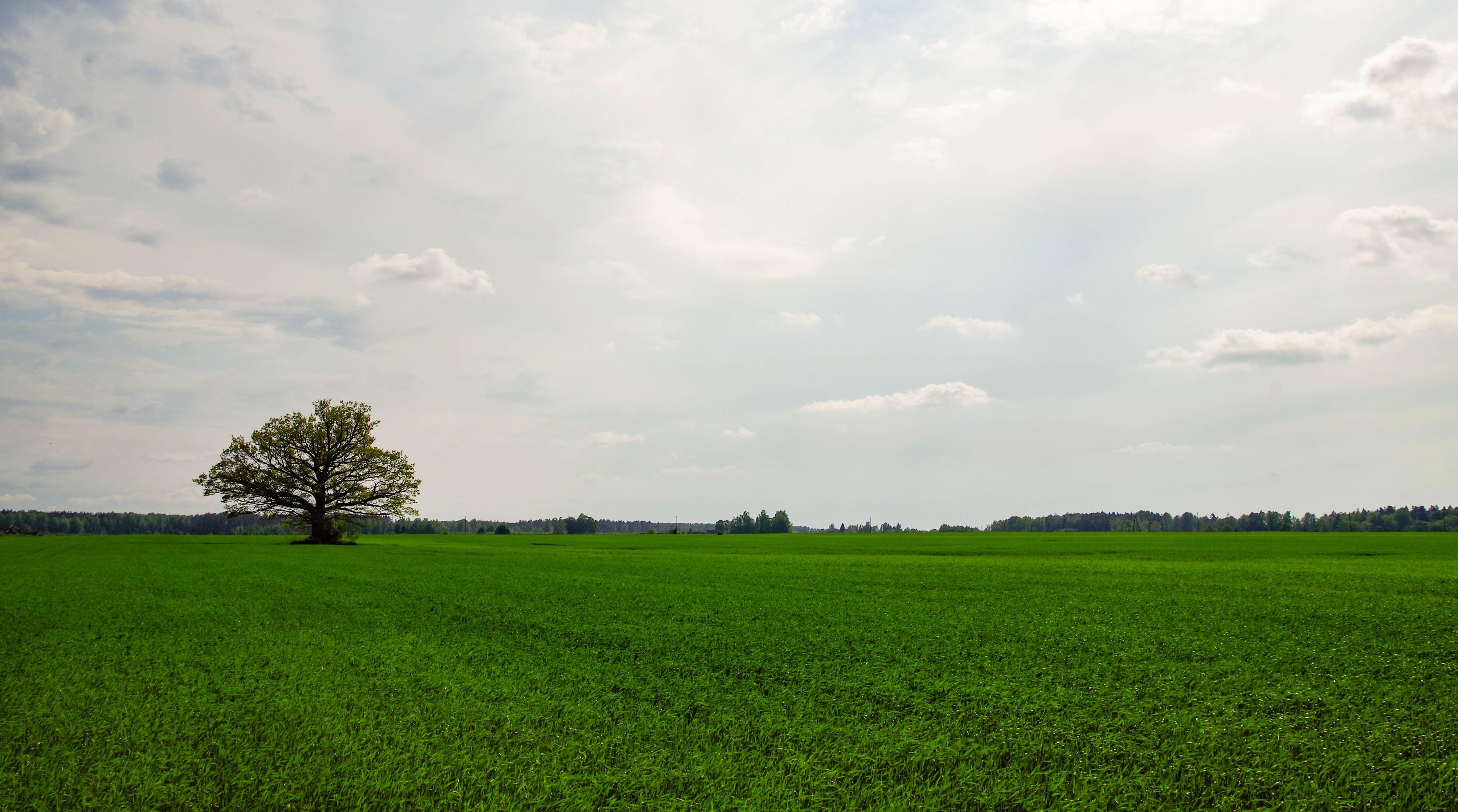 Fotos de stock gratuitas de arboles, campo, césped, cielo