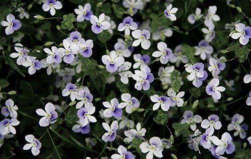 bitki örtüsü, bitkibilim, bitkiler, bulanıklık içeren Ücretsiz stok fotoğraf