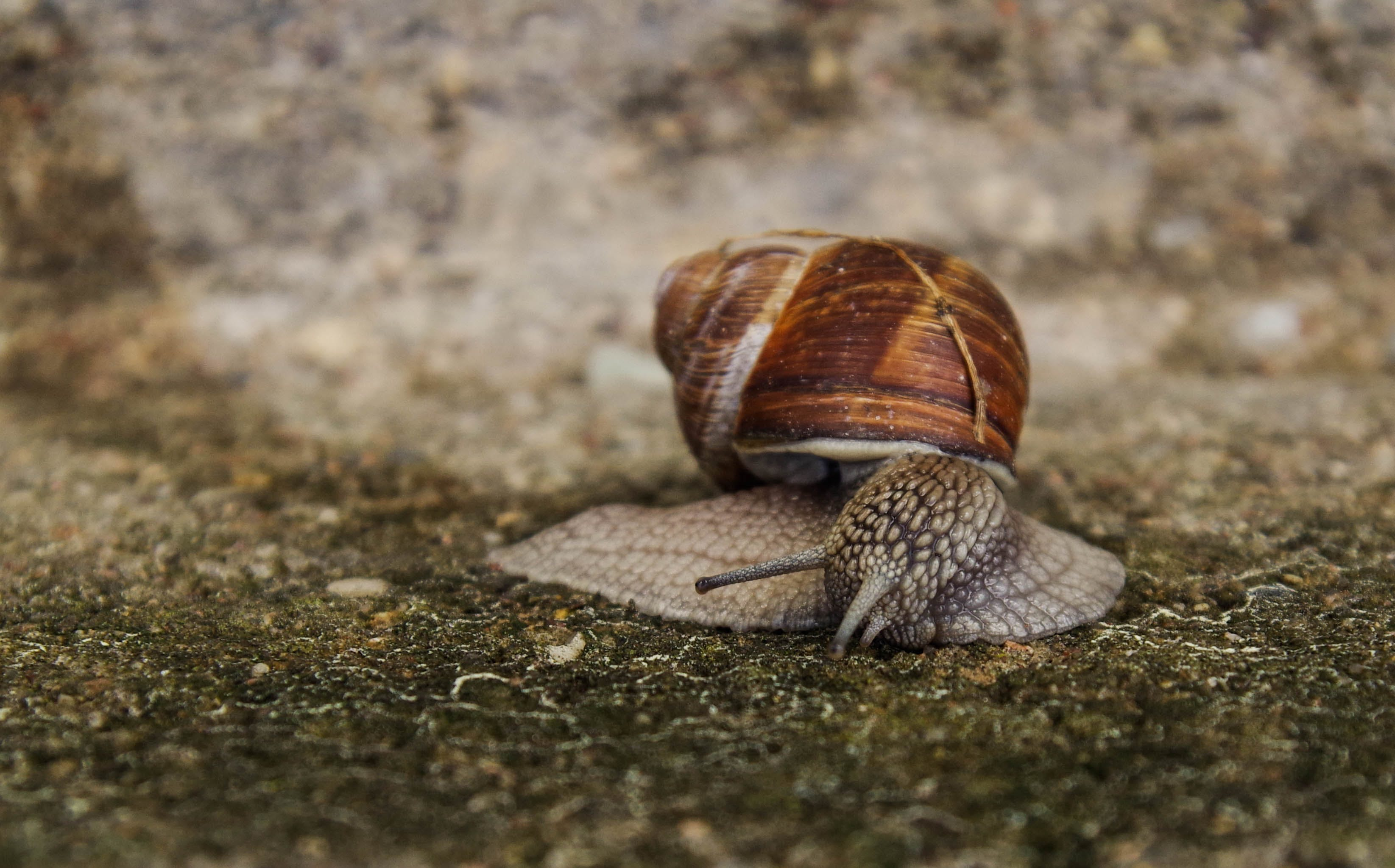 Close-up Photography of Snail