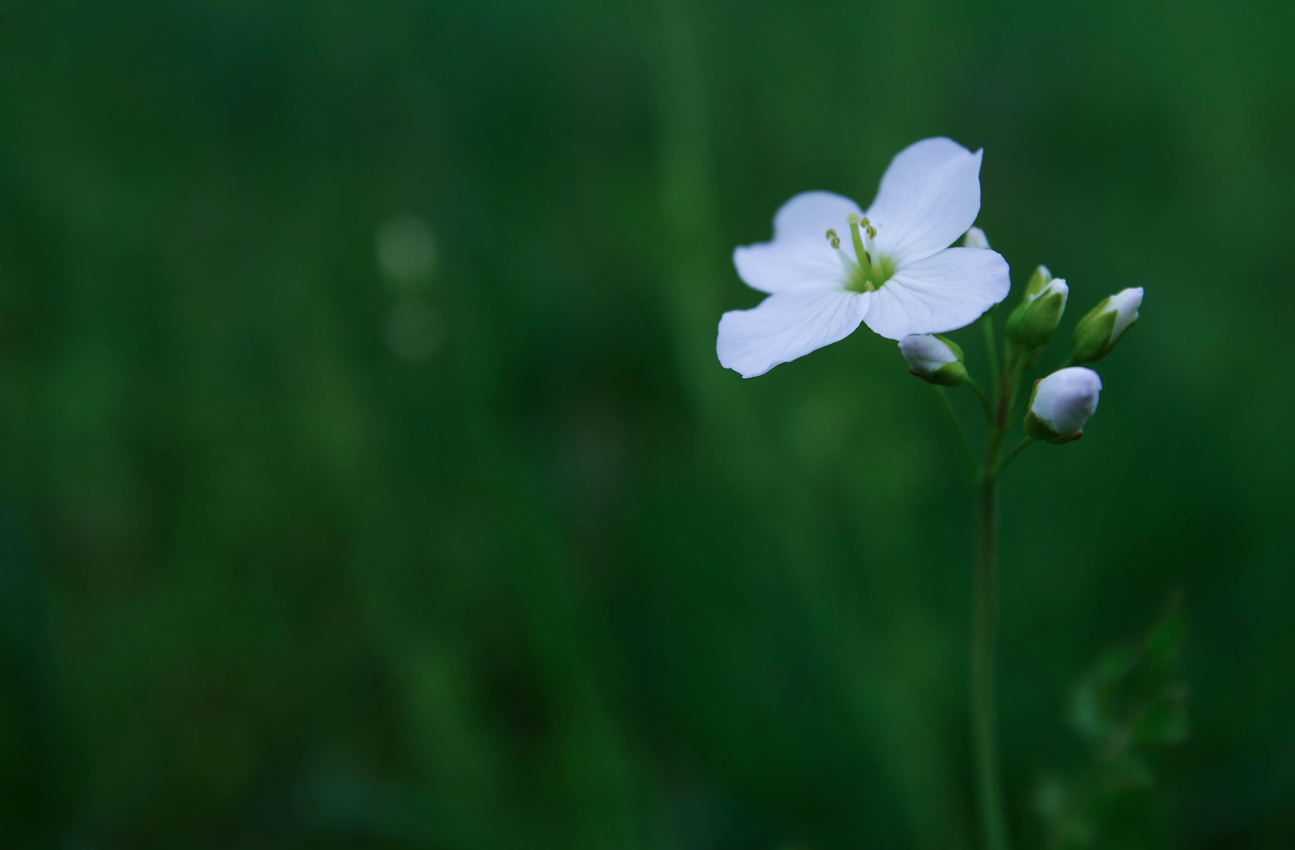 alan derinliği, Bahçe, bitki örtüsü, bulanıklık içeren Ücretsiz stok fotoğraf