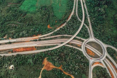 Immagine gratuita di alberi, autostrada, colori, curva