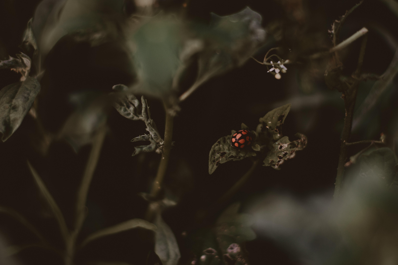 Ladybird Perched on Vegetation Leaves