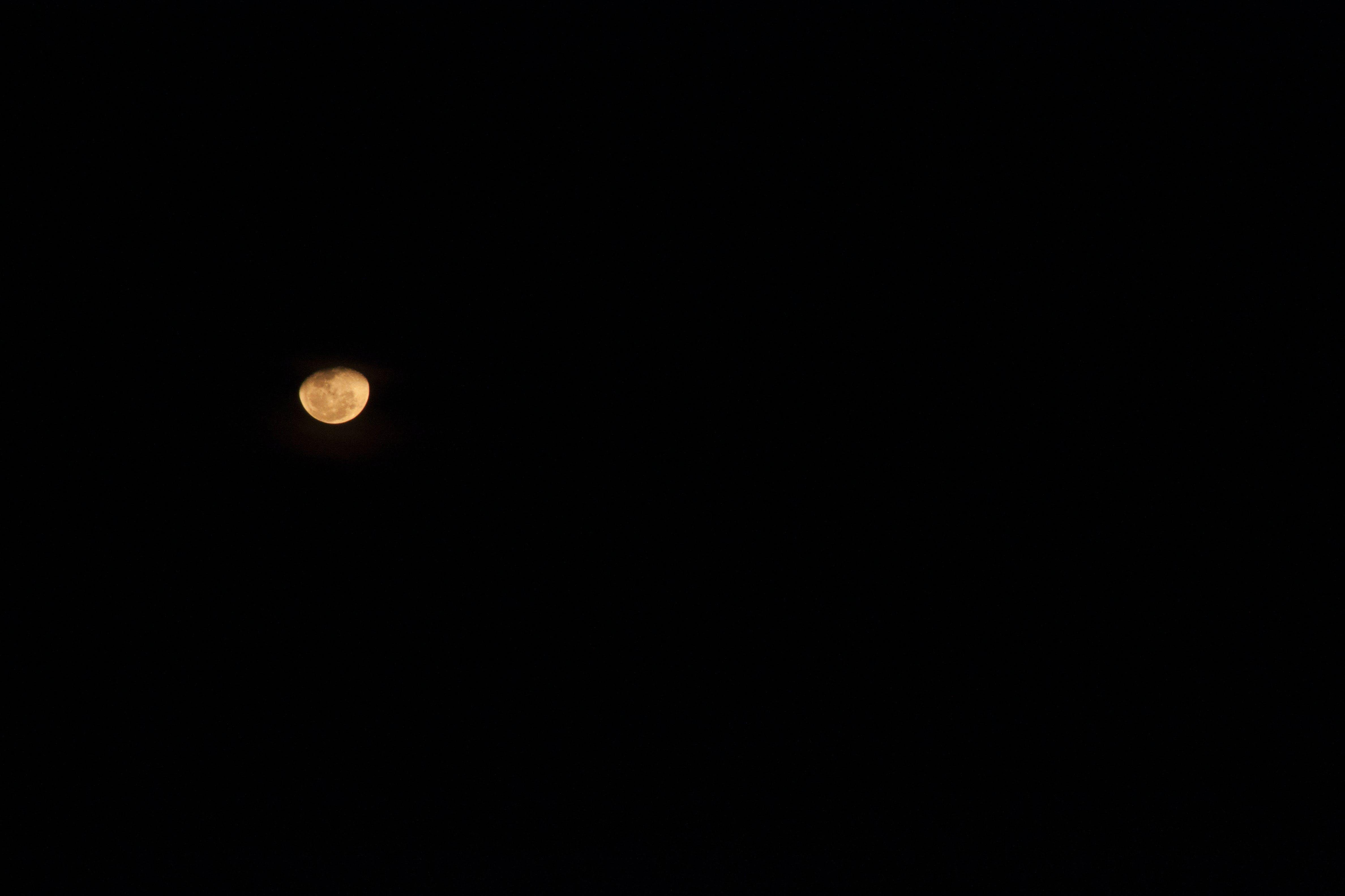 Free stock photo of blood moon, moon, night sky