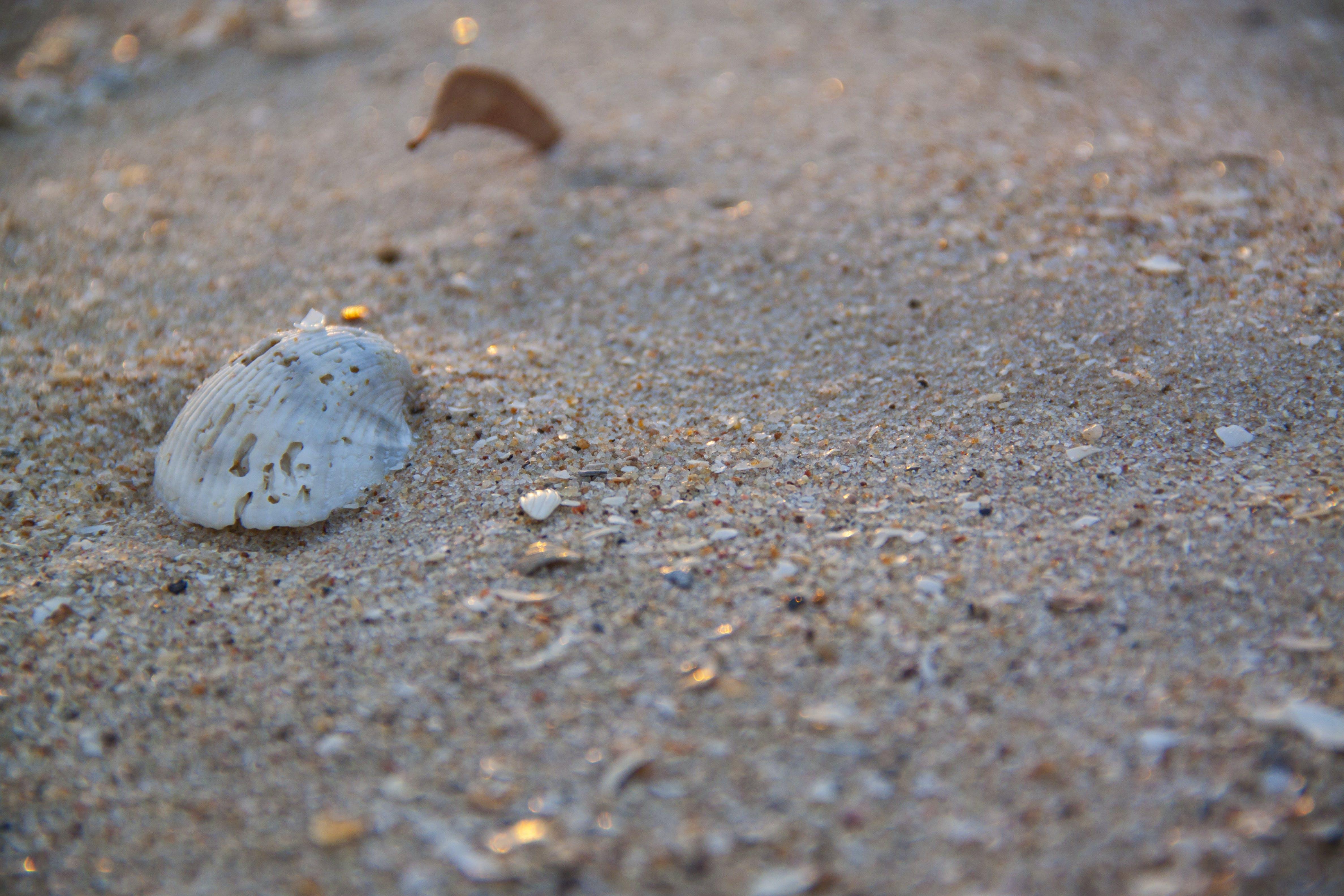 Free stock photo of beach, sand, sea, seaside