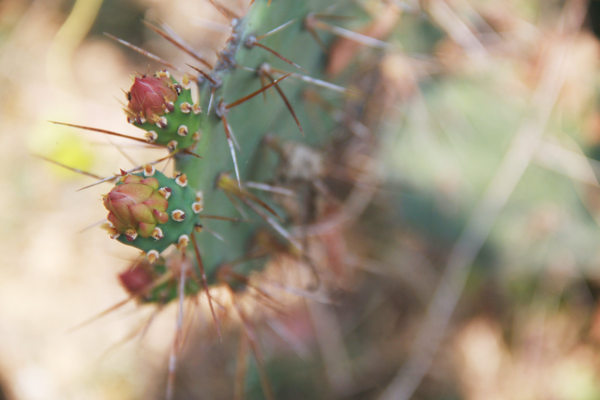 Free stock photo of cactus, close-up view, green, tree