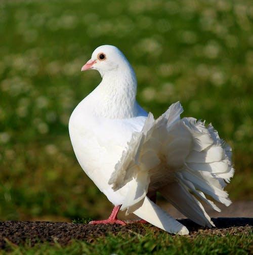 Бесплатное стоковое фото с #bird, #indianfantail #birdwatching #wildlifephotography