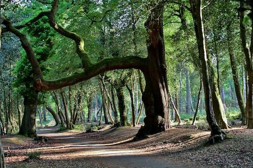Gratis lagerfoto af forestpark, natur, park