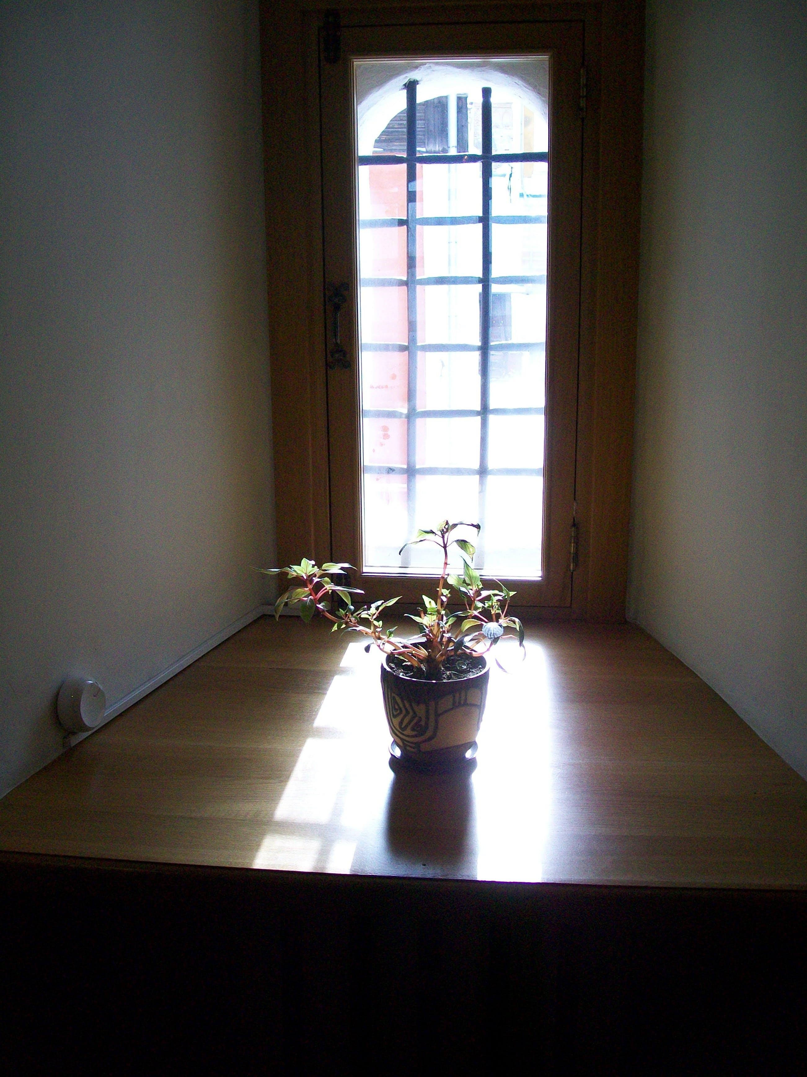 Free stock photo of flower, sun