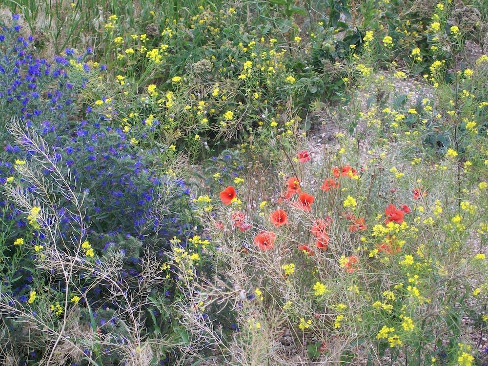 fa színe, nyár, virágok