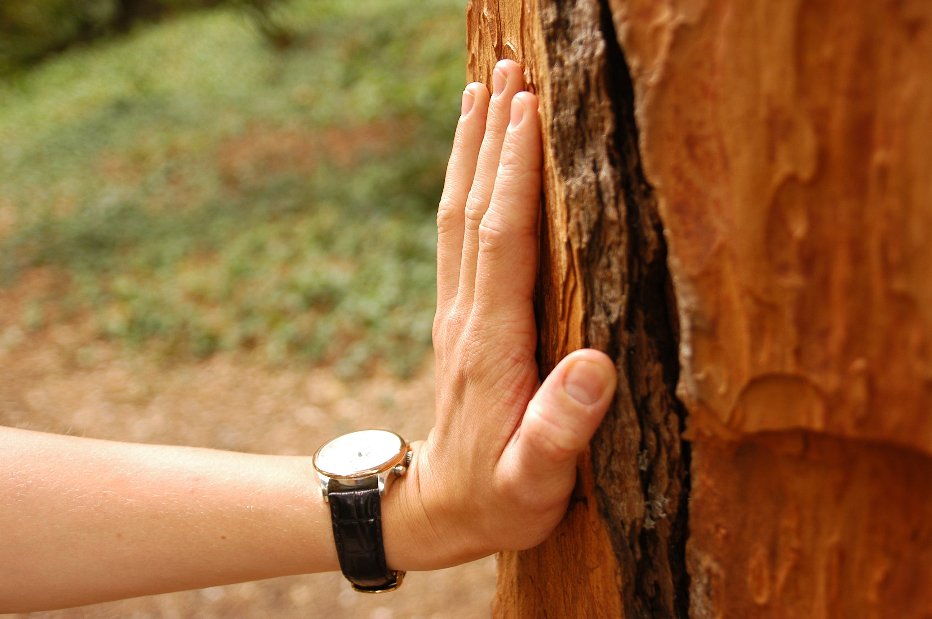 Close-up Photography of Person Wearing Watch Holding Tree