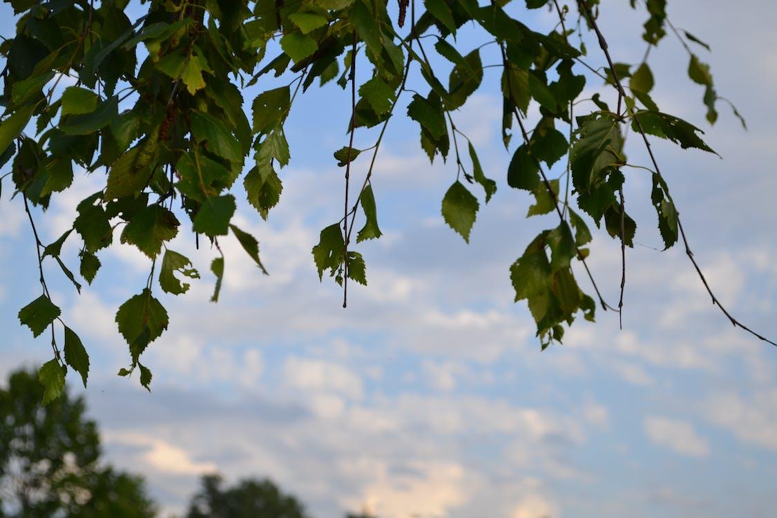 天空, 樹, 盤子 的 免費圖庫相片