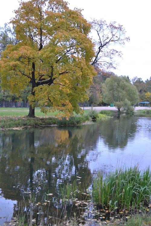 公園, 水 的 免費圖庫相片