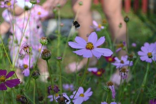 Безкоштовне стокове фото на тему «джміль, дитина, квіти»