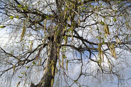 Безкоштовне стокове фото на тему «дерева»