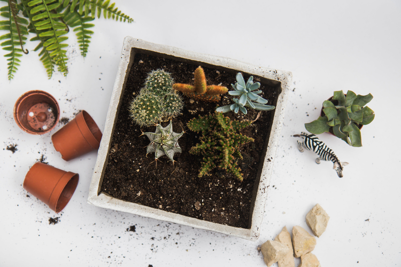 Green Cactus Plant in White Pot