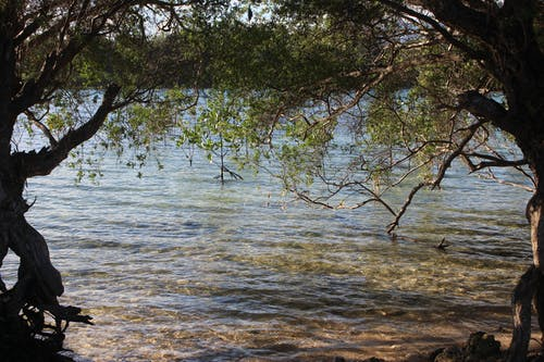 Free stock photo of mangroves, nature, water plants