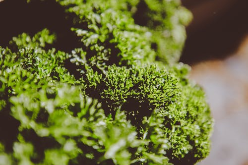 Selective Focus Photography Of Plant