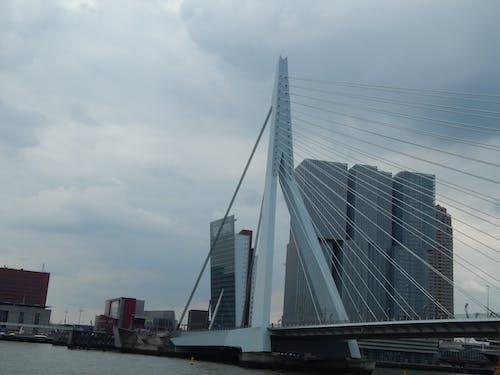 Imagine de stoc gratuită din arhitectură, de rotterdam, erasmusbridge, kpn