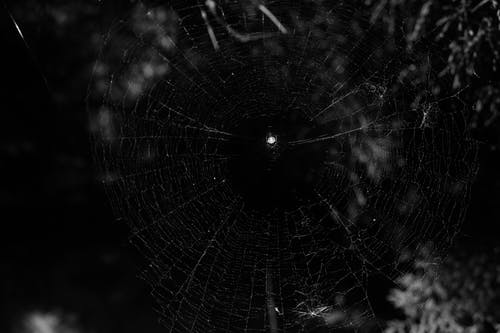 Free stock photo of abstract photo, cobweb, dark blue, dark side
