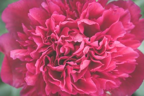 Δωρεάν στοκ φωτογραφιών με macro, λουλούδι, μακροφωτογραφία, όμορφος