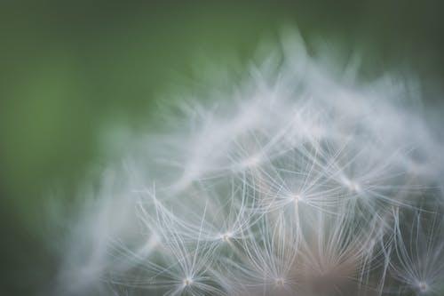 Foto d'estoc gratuïta de bonic, color, creixement, delicat