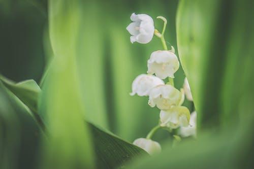 Gratis lagerfoto af blomster, farve, farverig, hvid
