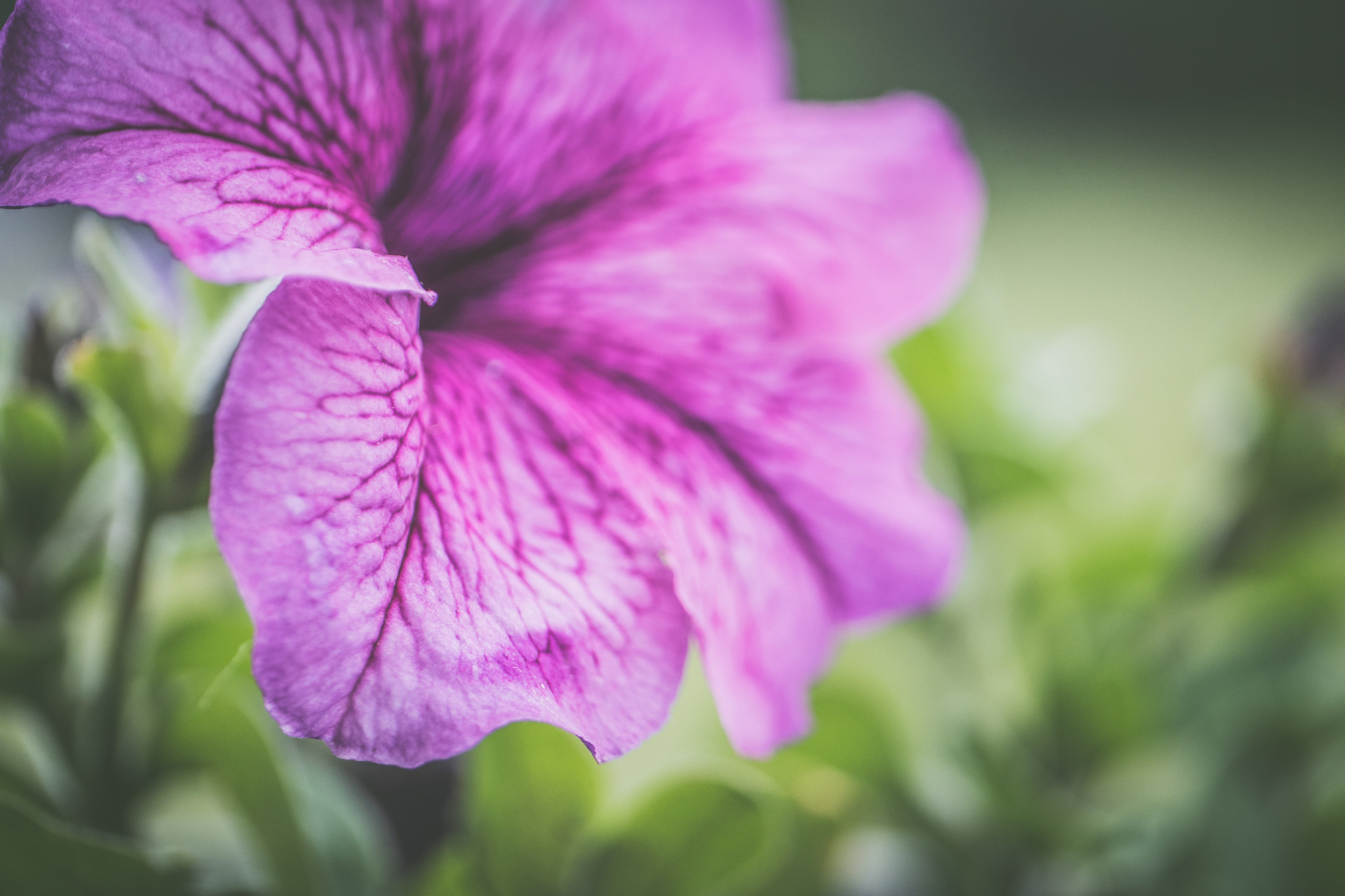 Photography of Shallow Focus Purple Flowers
