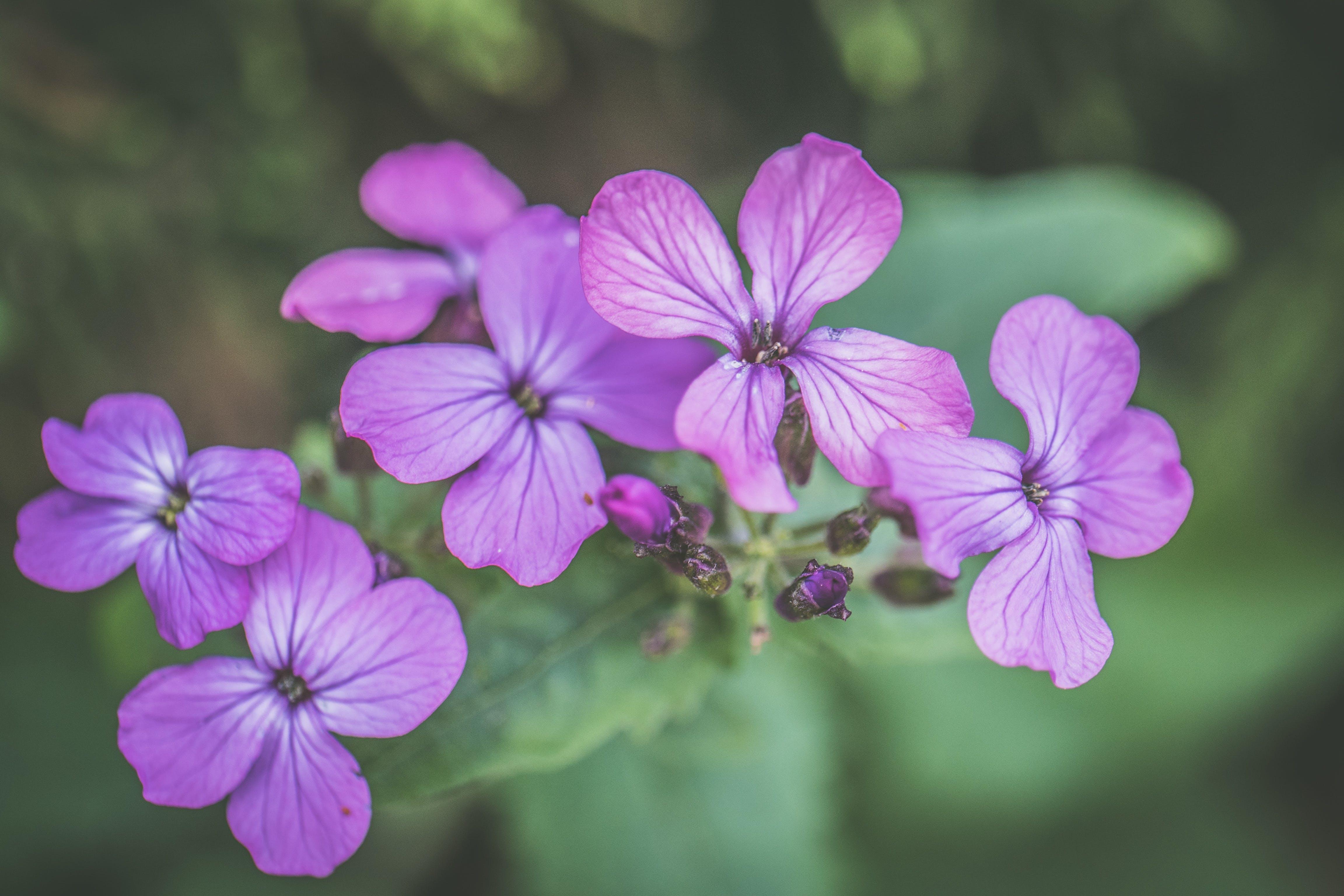 Photo of Purple Petaled Flowers