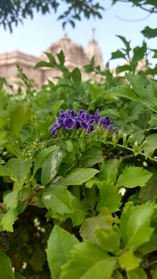 Free stock photo of beautiful flowers, green, green leaf