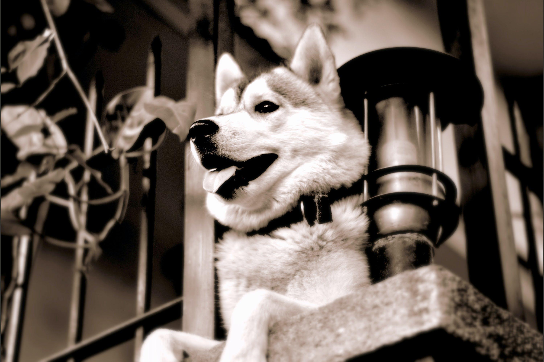 Free stock photo of cool, dog, fence, futuristic
