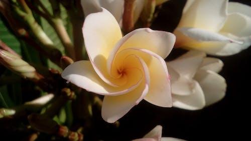 Foto d'estoc gratuïta de flor, flora, florir, macro