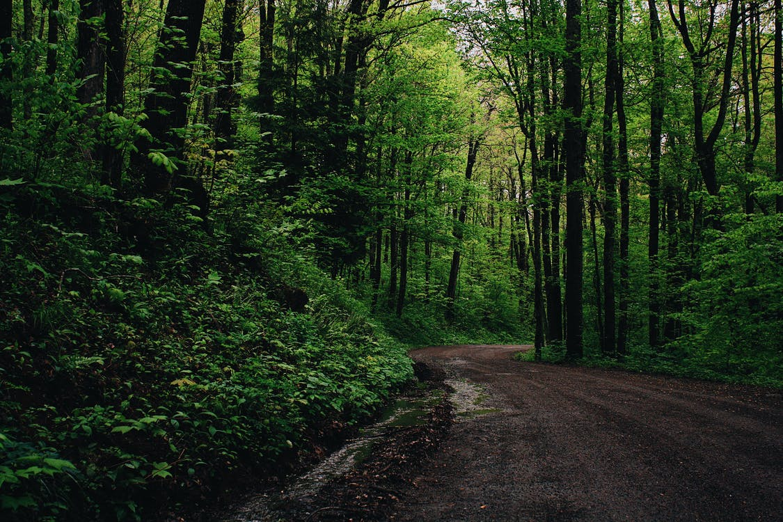 Green Leafed Trees Beside Road