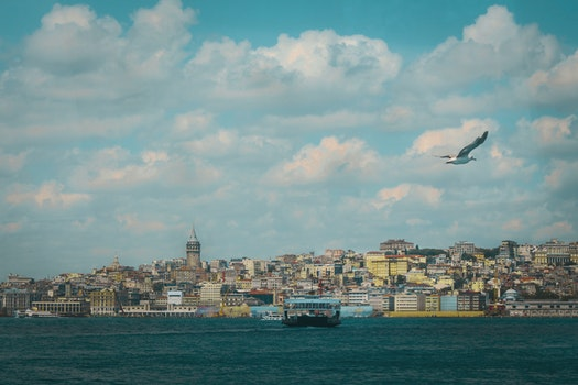 Free stock photo of sea, city, bird, clouds