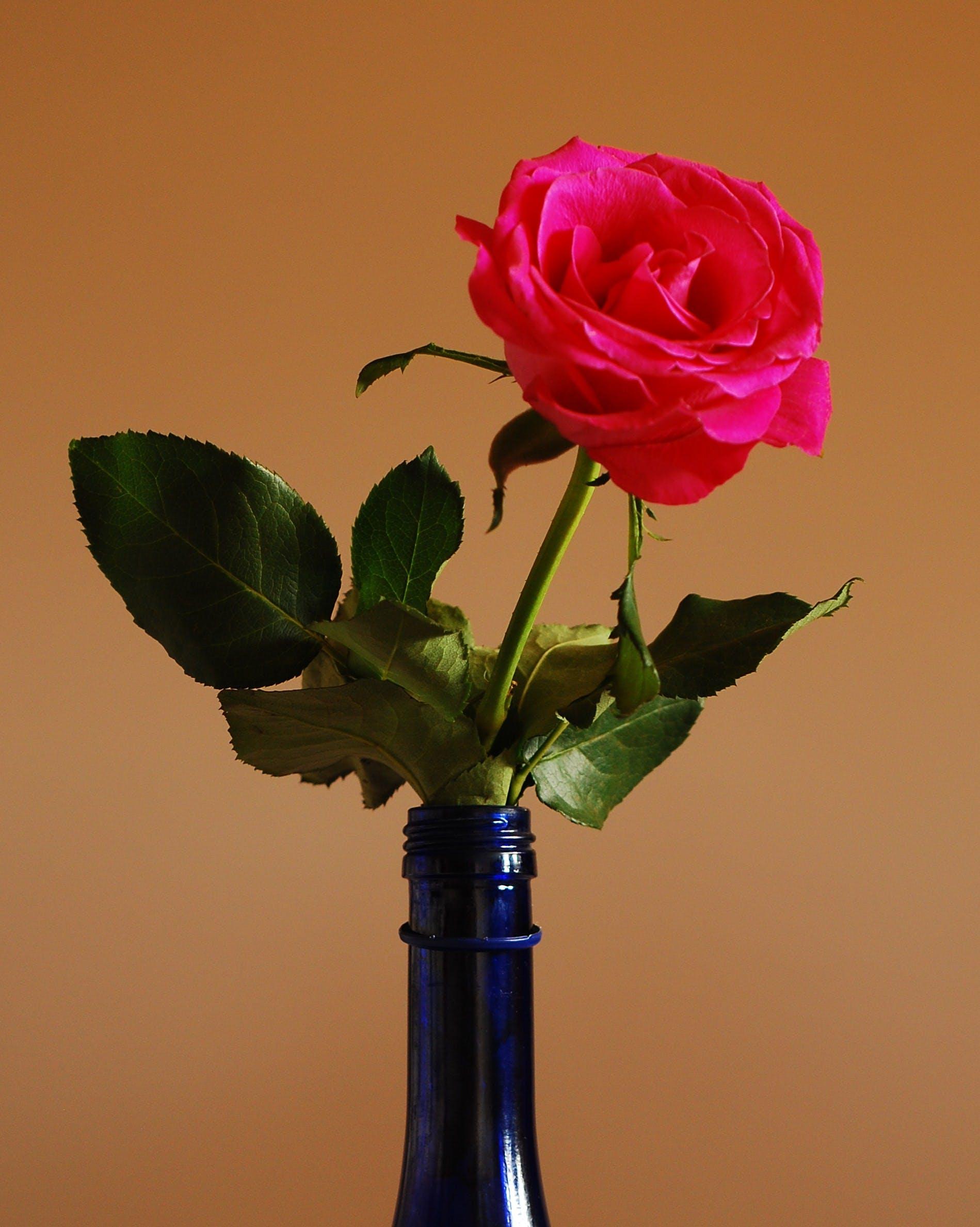Gratis lagerfoto af flaske, rose