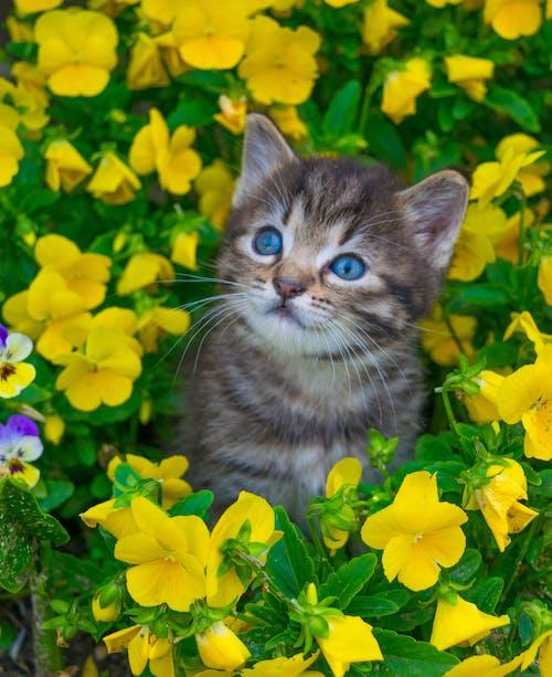 walpaper, 可愛, 夏天, 寵物 的 免费素材照片