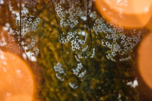 Fotos de stock gratuitas de abeto, amor, árbol en flor, atmosférico